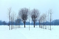 Gray Leafless Tree during Winter Royalty Free Stock Image