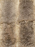 Gray leathers of rabbits, four Royalty Free Stock Images