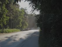 Gray light road surrounded by green summer trees, bushes and grass, illuminated by the rising golden sun. Gray light road surrounded by green summer trees stock photography