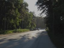 Gray light road surrounded by green summer trees, bushes and grass, illuminated by the rising golden sun. Gray light road surrounded by green summer trees stock images