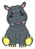 Gray little hippo Royalty Free Stock Photos