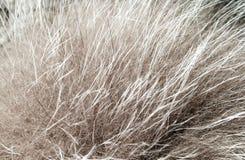 Gray long fur Royalty Free Stock Image