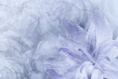 Gray luminoso astratto floreale - fondo bianco-viola I petali di un giglio fioriscono su un fondo gelido bianco-viola Primo piano immagini stock libere da diritti
