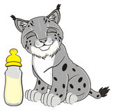 Gray lynx with drink Stock Image