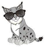Gray lynx in sunglasses Stock Photos
