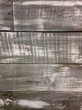 Gray Matter Royaltyfria Bilder