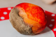 Gray mold on fresh peach Stock Image