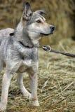 Gray mongrel dog Stock Photo