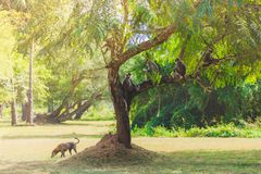 Gray monkeys sitting on a tree in the jungle royalty free stock photo