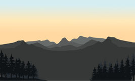 Gray mountain and spruce silhouette Stock Photography