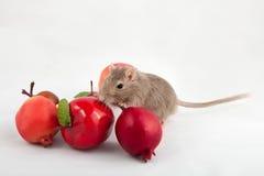 Gray mouse gerbil with fruit Stock Photos