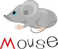 Gray mouse Stock Images