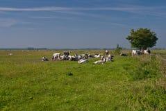 Gray neat at national park Fertő-Hanság,Hungary Royalty Free Stock Photography