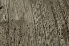 Gray oakwood surface background texture stock photo