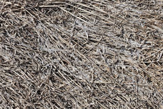 Gray old dead grass Royalty Free Stock Image