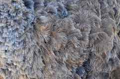Gray ostrich feathers - background, texture Royalty Free Stock Images