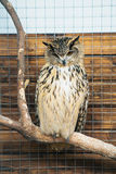 A gray owl is sitting in a cage in the zoo Stock Image
