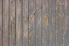 Gray paint peels off wood Royalty Free Stock Photo