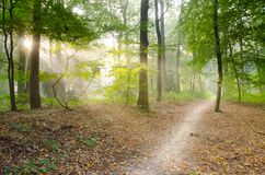 Gray Pathway Surrounded by Green Tress Royalty Free Stock Photo
