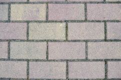 Gray paving slabs Stock Image