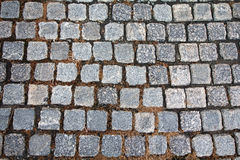 Gray paving stones and yellow grass Stock Photo