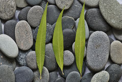 Gray pebble Royalty Free Stock Images