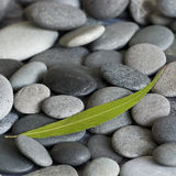 Gray pebble Royalty Free Stock Image