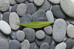 Gray pebble Stock Photo