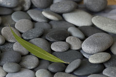 Gray pebble Stock Photography
