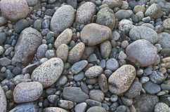 Gray pebbles. Royalty Free Stock Image
