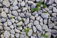Gray Pebbles With Green Grass Royalty Free Stock Photos