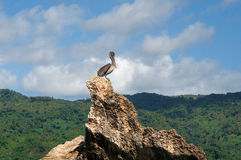 Gray pelican on a rock against the blue sky Royalty Free Stock Photography