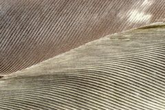 gray piórkowe tło zdjęcia stock