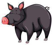 Gray pig. One gray pig on a white background stock illustration