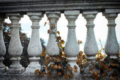 Gray pillars and brown ivy Stock Photography