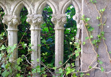 Gray pillars and ivy Royalty Free Stock Image
