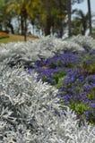 Gray Plant Foto de archivo libre de regalías