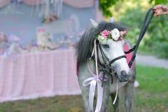 Gray pony Stock Images