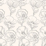 Gray poppies Stock Images