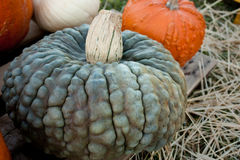 A Gray Pumpkin. A light gray, bumpy pumpkin on straw Stock Photos