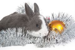 Gray rabbit and christmas decoration, isolated Royalty Free Stock Image