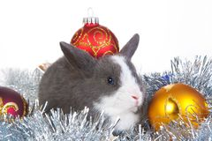 Gray rabbit and christmas decoration, isolated Stock Image