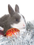Gray rabbit and christmas decoration, isolated Royalty Free Stock Photos