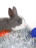 Gray rabbit and christmas decoration, isolated Stock Photos