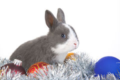 Gray rabbit and christmas decoration, isolated. On white Stock Images