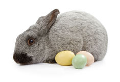 Gray Rabbit Isolated on White With Easter Eggs Royalty Free Stock Image