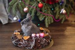 A gray rabbit sits a Christmas basket.Christmas decorations stock photography
