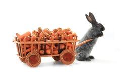 Gray rabbits Stock Image
