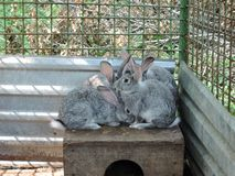 Gray rabbits sitting in a cage near their booth. Household in rural areas.  stock photos