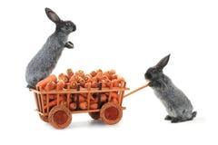Gray rabbits Royalty Free Stock Photos